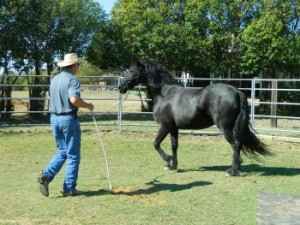 Joe works a Friesian in Clinic